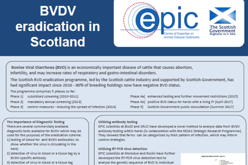 BVDV Eradication in Scotland Poster RHS 2018